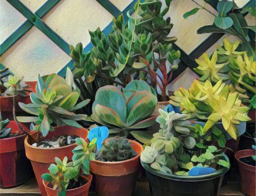 Cosas que he aprendido con mis plantas
